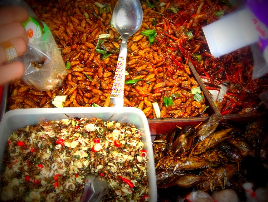 Insects at Chatuchak Market