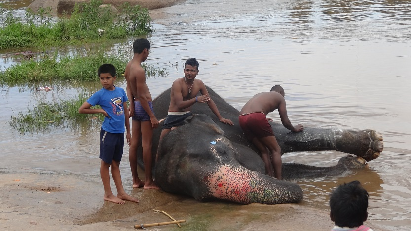 Elephant Bath in Hampi - Why I love living in India by DrifterPlanet.com