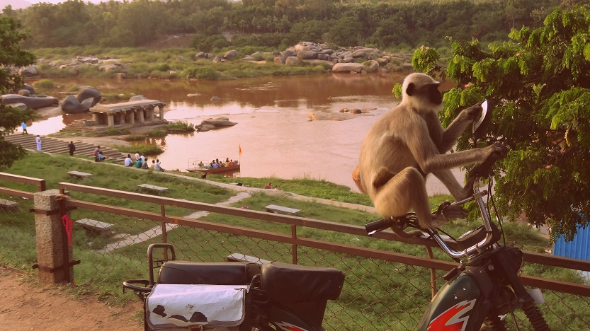 This monkey was totally checking himself out