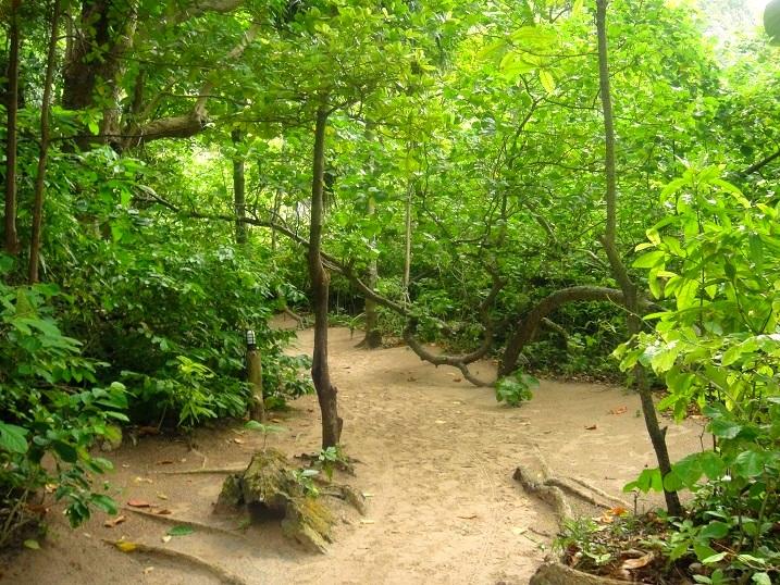 Maya Bay Forest2