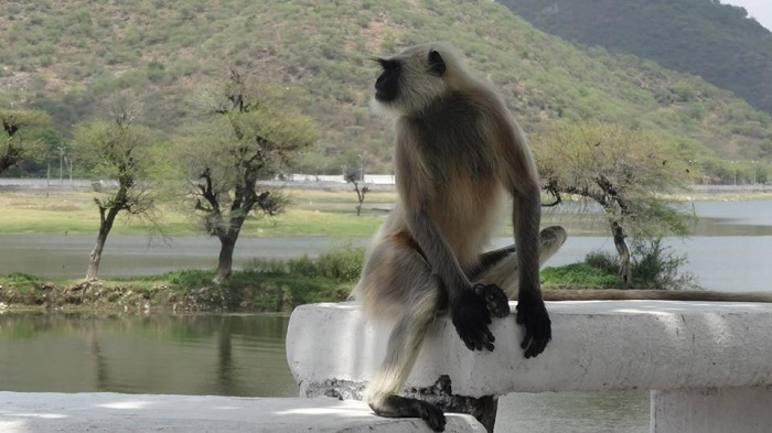Monkey on the street in India - why life in India is awesome by DrifterPlanet.com