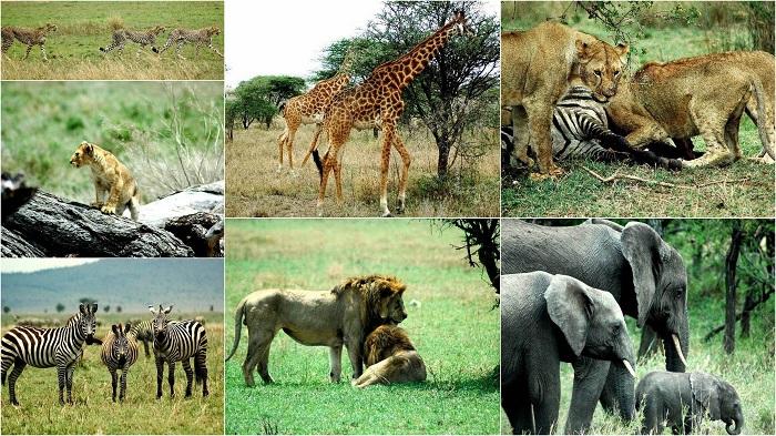 Serengeti National Park, Tanzania - 50 Surreal Travel Destinations