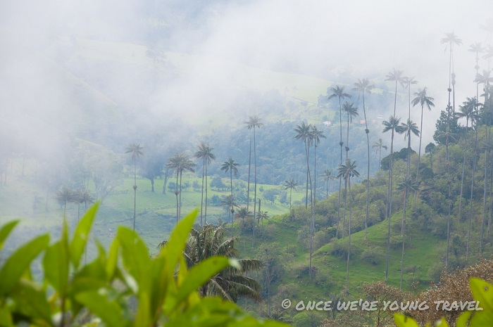 Valle de Cocora, Colombia - 50 Surreal Travel Destinations