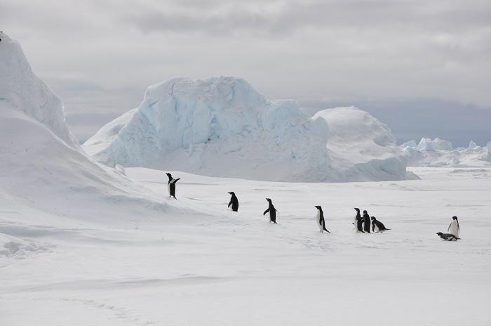 Antartica - Surreal Travel Destinations