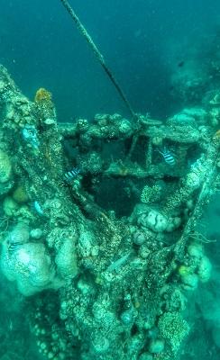Shipwreck Diving and Snorkeling - Skeleton Wreck in Coron, Palawan