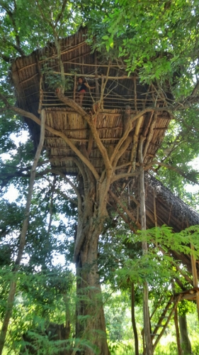 Sleeping in a tree house in Sri Lanka