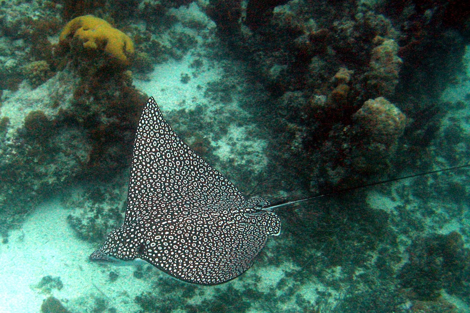 Snorkeling and Scuba Diving in The Turks and Caicos Islands