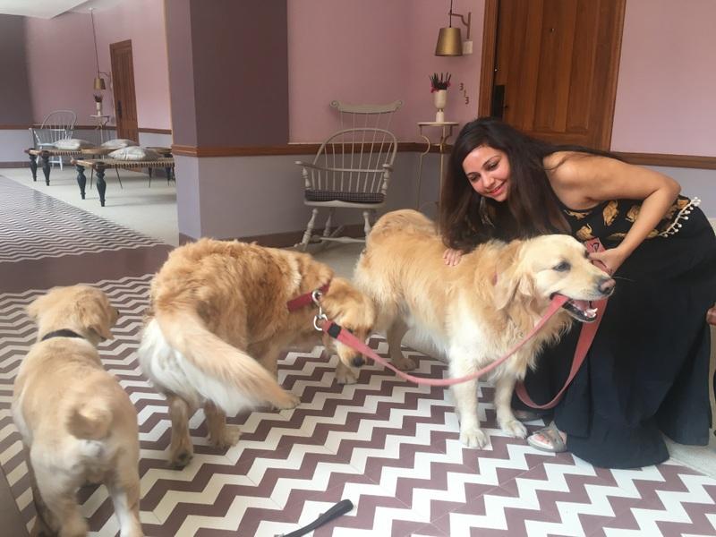 Eton, Nala and Simba - Narendra Bhawan's furballs