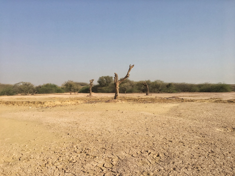 A Dry Patch in Gajner Sanctuary near Bikaner