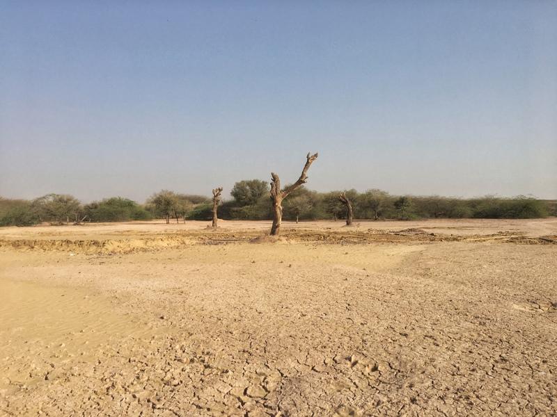 Gajner Sancuary near Bikaner