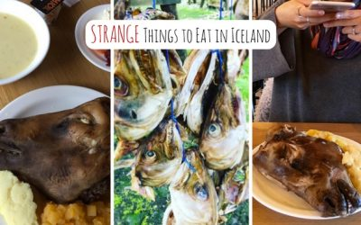 4 Strange Things to Eat in Iceland