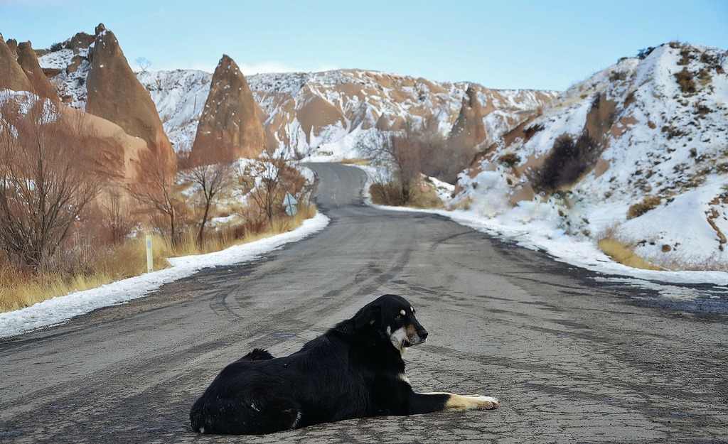 A dog sitting on the road in Cappadocia with snow around