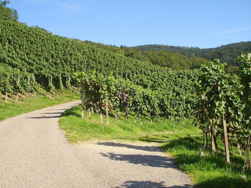 Germany's wine route - der Weinstraße