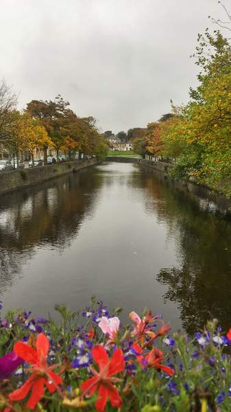 Flowers, autumn trees and Carrowbeg river in Westport, Ireland