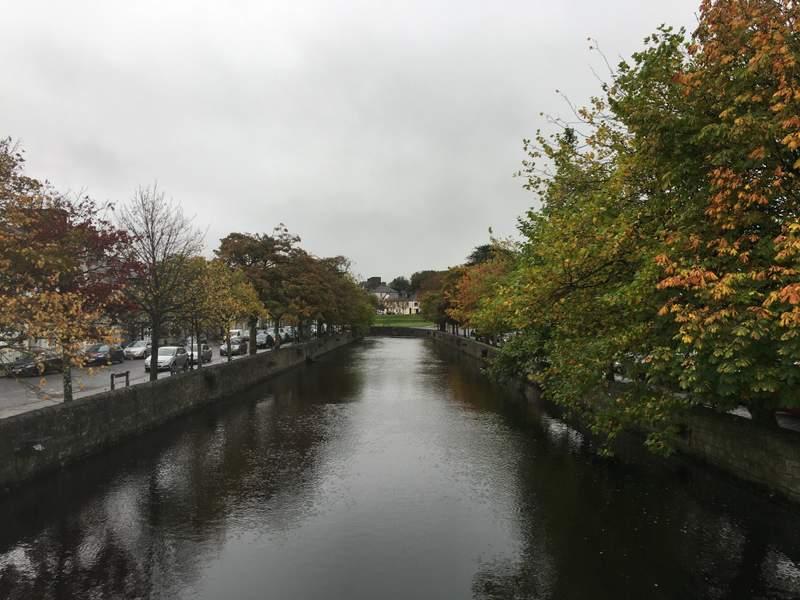 Trees around the Carrowbeg River in Westport, Ireland