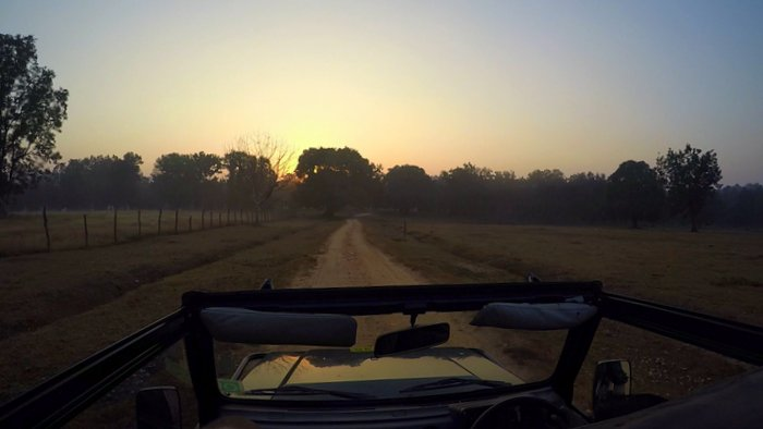 Early Morning Jeep Safari in Kanha National Park, Madhya Pradesh