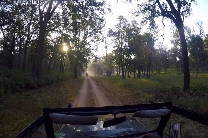 Early morning jungle safari in Kanha Tiger Reserve, Madhya Pradesh