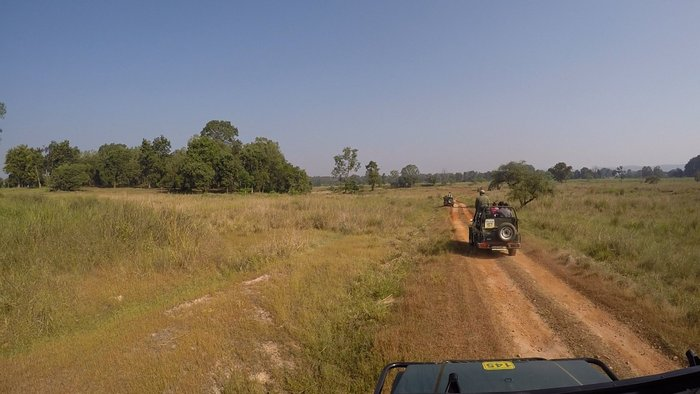 Grassy meadow inside Kanha National Park, MP