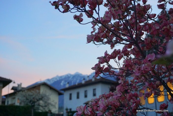 Sunset in Flavon with Spring Flowers - Val di Non, Trentino, Italy