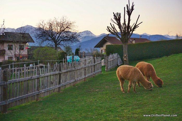 Visiting Italy's Valley of Love: Val di Non, Trentino (+Brenta Dolomites)