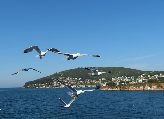 Seagullls with Princes Islands in the background - Istanbul, Turkey