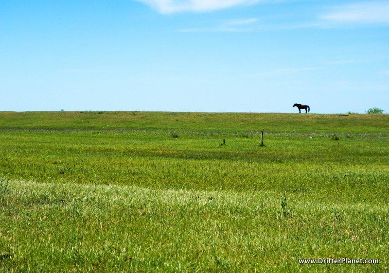A Horse in Letea Forest Reserve – the Danube Delta, Romania