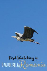 Bird Watching in Denube Delta Biosphere Reserve, Romania