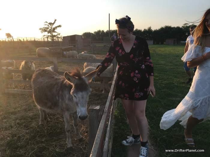 Alice with a donkey at Ferma Animalelor Ograda Veseliei - Animal Farm near Vama Vecha, Constanta, Romania