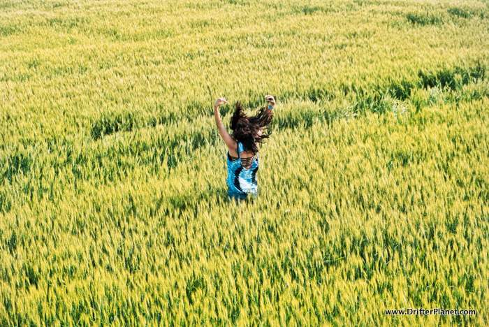 Wheat field in Constanta country side, Romania