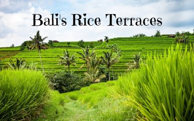 Guide to Ubud Rice Fields [and Around]- the Famous Rice Terraces in Bali, Indonesia