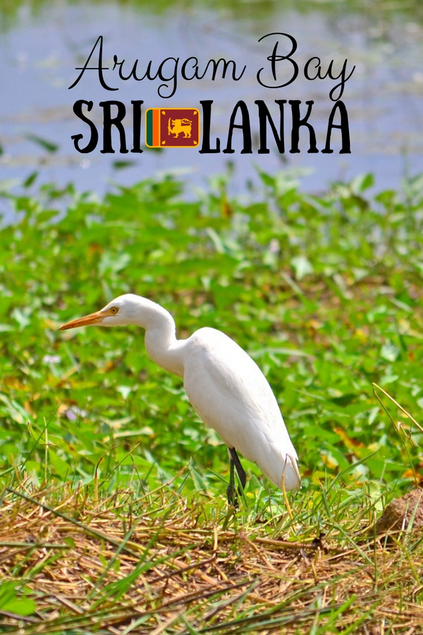 Pottuvil Lagoon - Arugam Bay, Sri Lanka