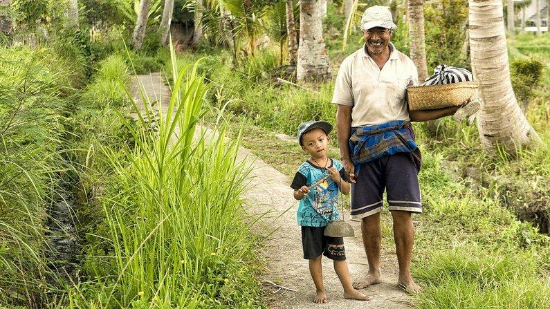 Penestanan Rice Fields of Ubud, Bali