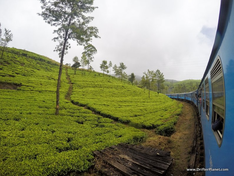 Tea gardens and little hills view from the train Nuwara Eliya to Ella route