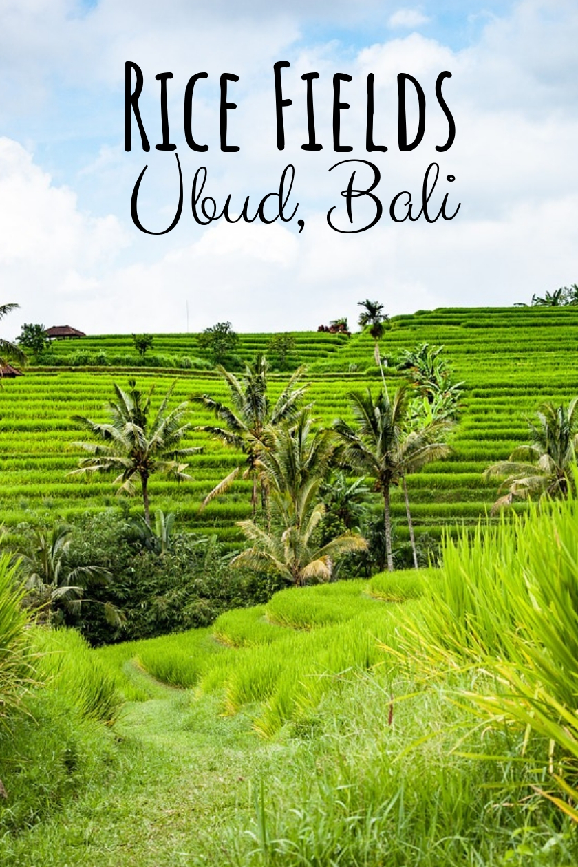 Ubud Rice Fields [and Around]- the Famous Rice Terraces in Bali, Indonesia