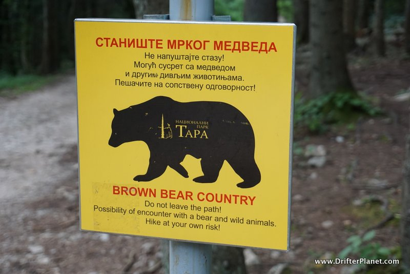 Brown Bear Warning in Tara National Park, Serbia
