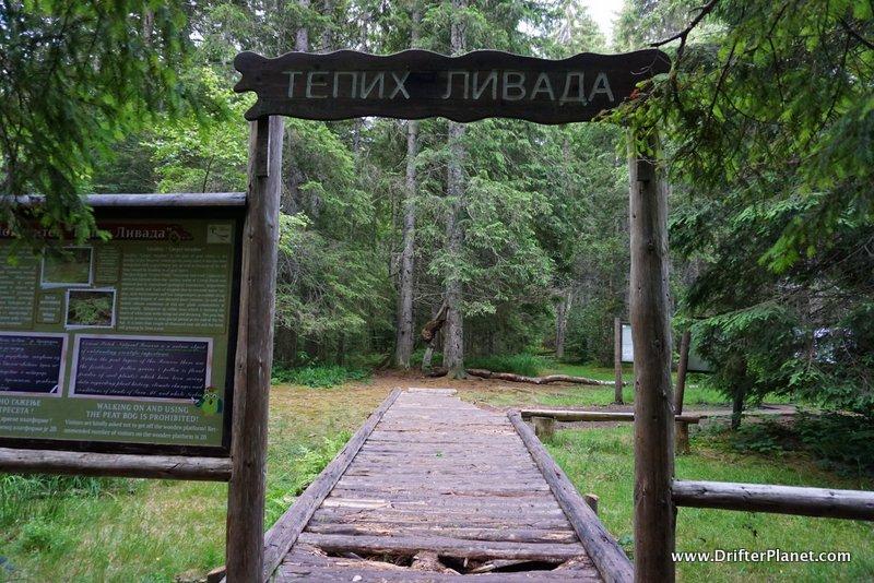 Carpet Meadow, Tara National Park, Serbia