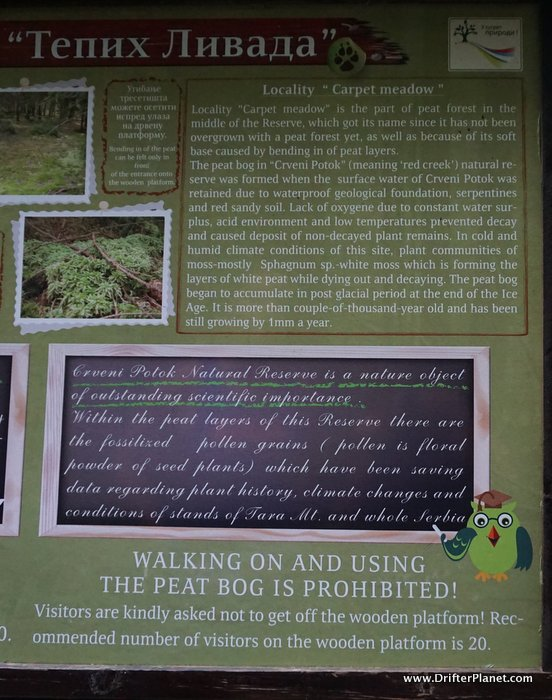 Info about Carpet Meadow, Tara National Park, Serbia