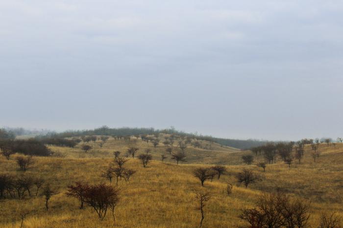 The Trees in Deliblato Sands, Serbia