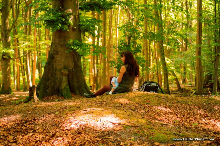 Sitting in the forest in Jasmund National Park