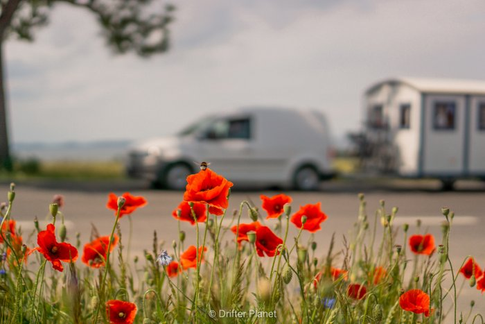 Wild Poppy field on Rugen Island and a car with a caravan in the background