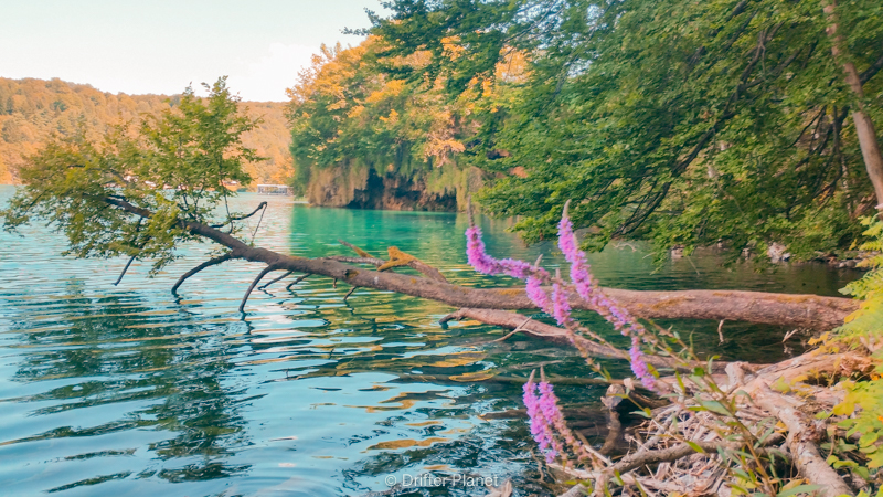 Lovely flowers inside Plitvice Lakes National Park, Croatia
