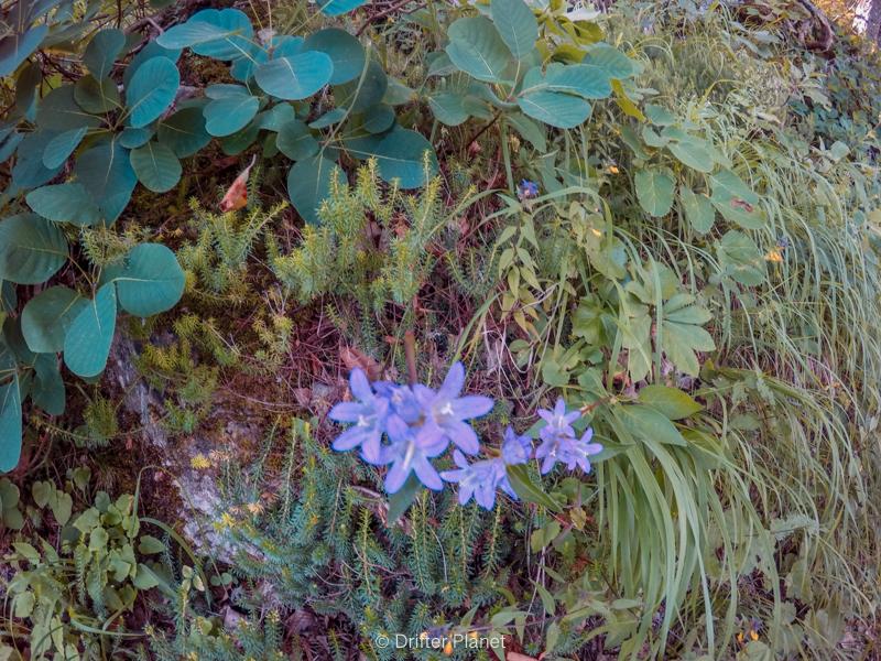The Flowers inside Plitvice Lakes National Park, Croatia