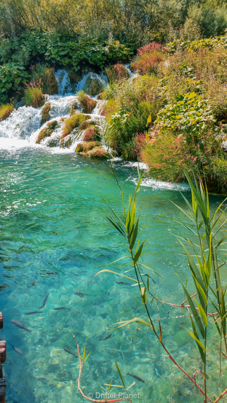 The great cascades, clear water and fish - Plitvice Lakes, Croatia