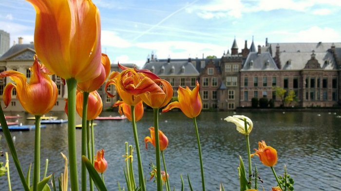 Den Haag or the Hague - Flowers and Architecture