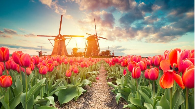 Keukenhof Flower Gardens - Lisse - the Netherlands