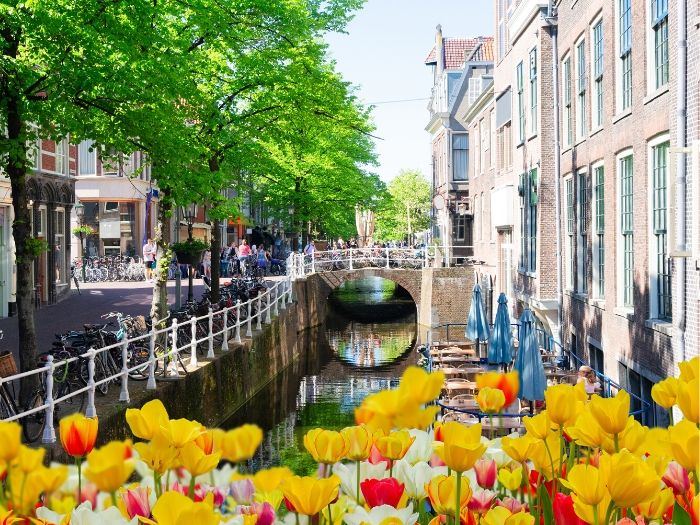 Tulips and Bicycles parked along the canal - Typical Dutch Scene - Delft
