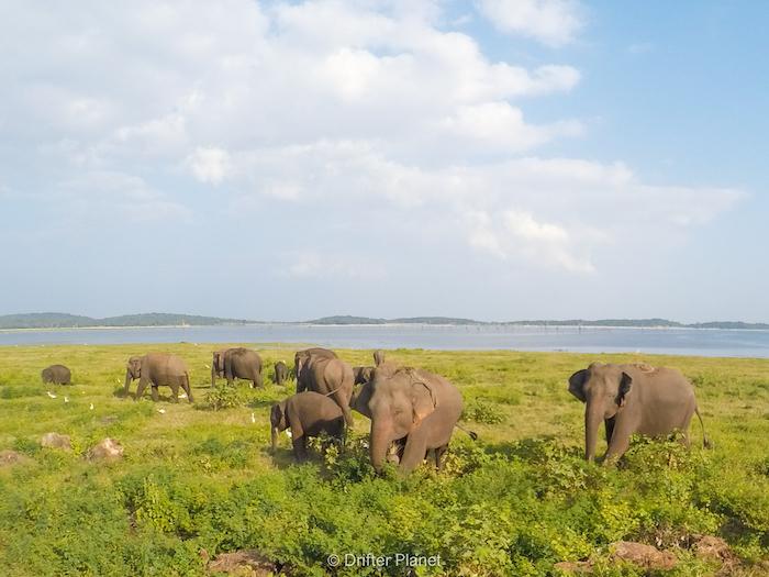 An adorable elephant family at Kaudulla National Park, Sri Lanka