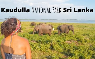 Kaudulla National Park Guide: Elephant Safari near Sigiriya, Sri Lanka