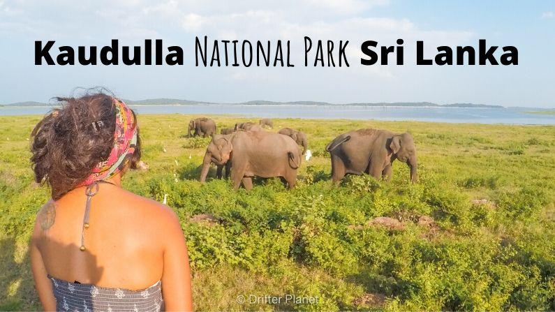 Kaudulla National Park Guide: Elephant Safari near Sigiriya, Sri Lanka