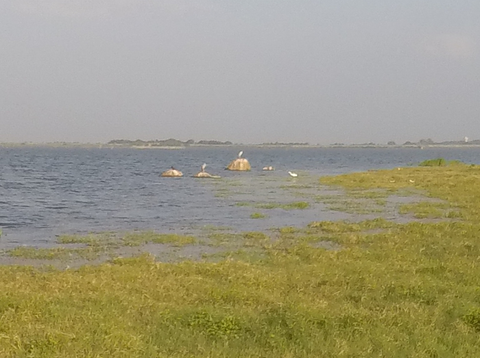 The reservoir inside Kaudulla National Park and pelican